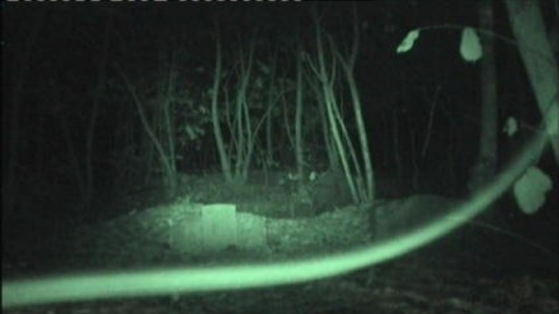 Ghost vortex is a ghost manifestation in the form solid stick like but without the zig-zagged visual appearance.