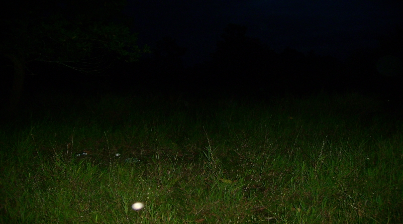 A blurring ghost ecto ball captured from an open field.