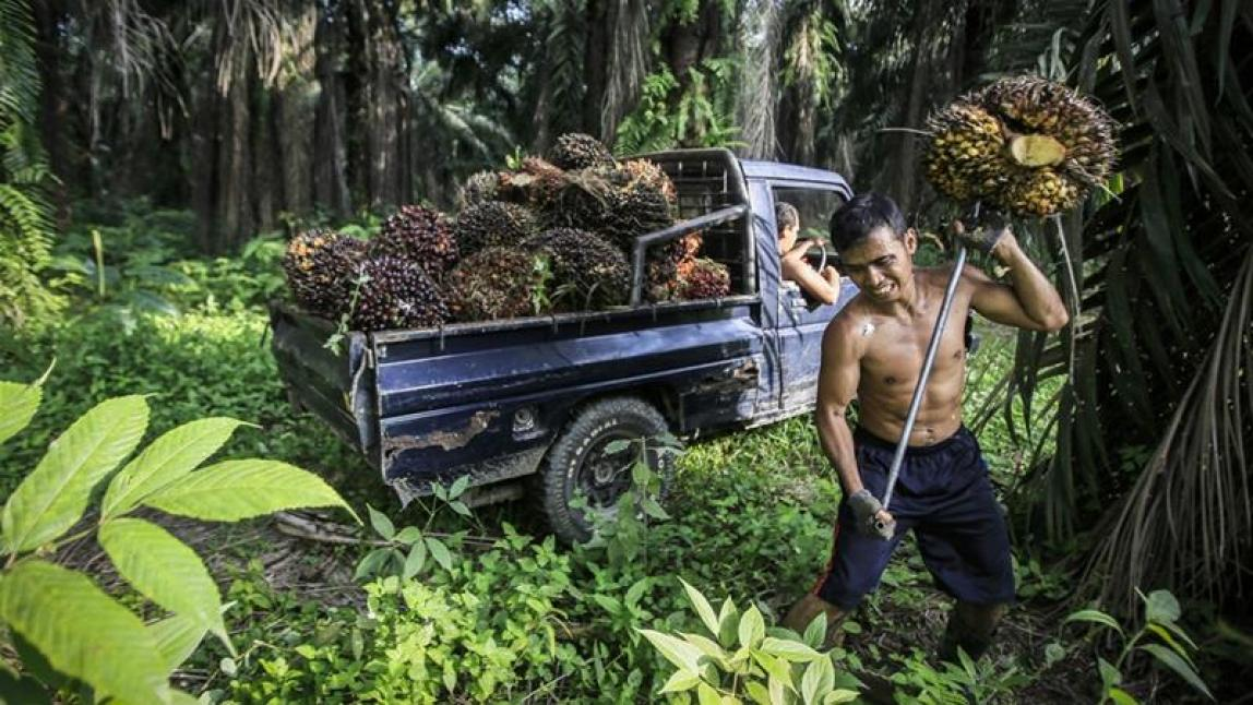 Indonesia and Malaysia produce palm oil Pic EPA