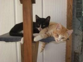 september-kittens-1