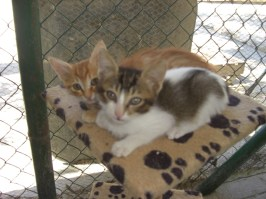 september-kittens-2