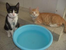 september-kittens-3