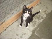september-kittens-8