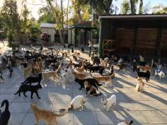 lots-of-cats-christmas