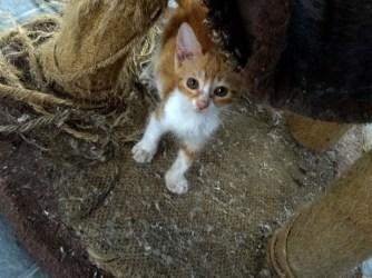 august-2018-kittens-1