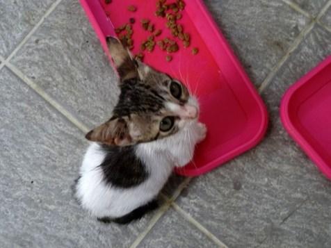 august-2018-kittens-5