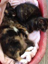 october-kittens-2