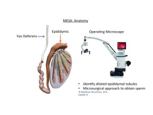 MESA-Microsurgical Epididymal Sperm Aspiration-Infertility