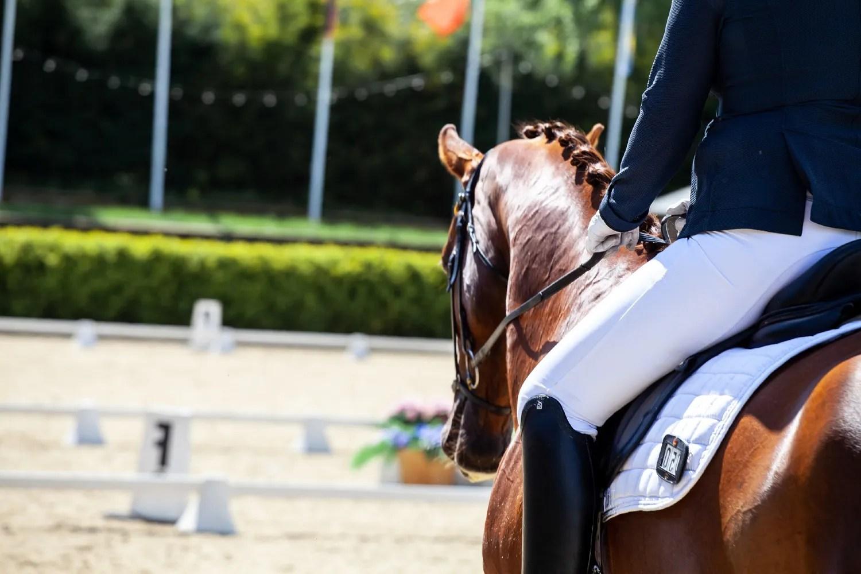 Hest_dressur_stævne_rytter