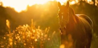 solnedgang_sommer_hest_romantik