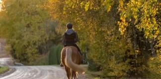 Hest rides i naturen på vej