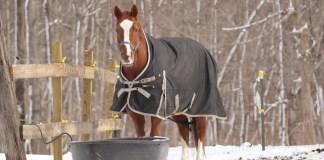 Hest på fold med dækken på om vinteren