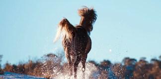 Hest løber i sne