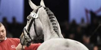 Herning Horse Show