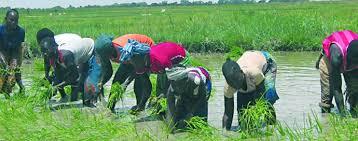Réhabilitation du Canal de Macina et du Fala de Boky Were: L'Office du Niger en quête de 26 milliards de FCFA
