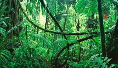 Pengertian Hutan
