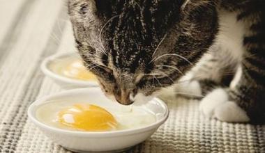 Manfaat Kuning Telur untuk Kucing