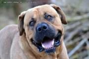 Drogenspürhund erschnüffelt 5 Kilo Kokain