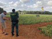 Guardia Civil verstärkt die Dienste zur Vorbeugung von Diebstählen auf Bauernhöfen