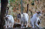 Wilde Katzen - sterile Katzen