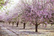 Zur Mandelblüte nach Mallorca – 4 Tipps für die perfekte Fotoreise