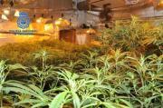 Marihuana-Plantage in Porreres ausgehoben
