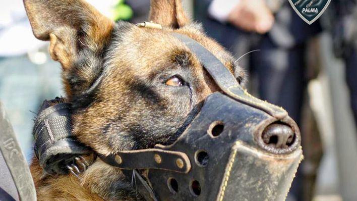 Polizeihunde von Palma