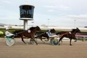 Manacor möchte Pferdesport forcieren