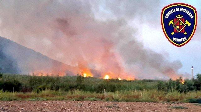 Waldbrand in s'Albufera ist gelöscht