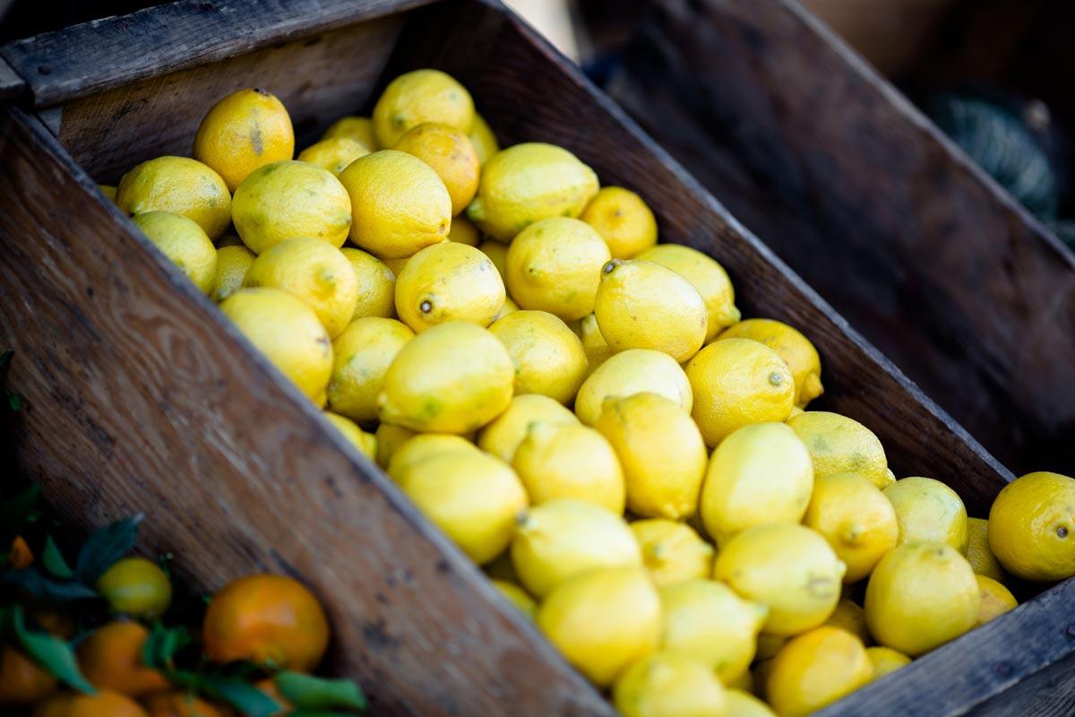 Zitronenernte auf Mallorca