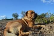 Strandbar für Hundehalter