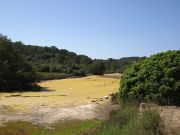 Parc natural de Mondragó