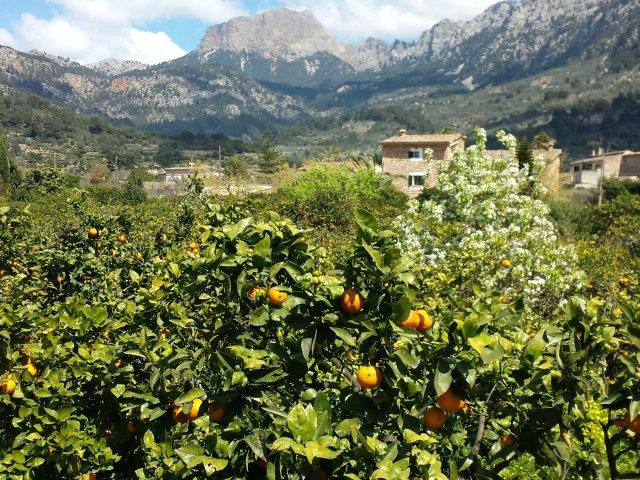Das Tal der Orangen auf Mallorca
