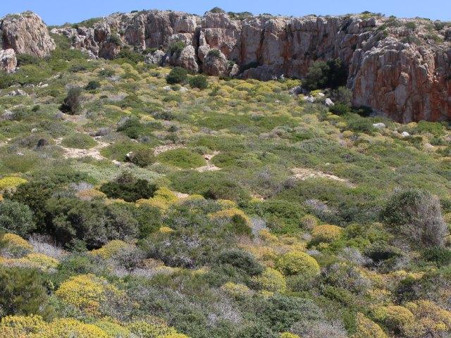 Vegetation auf Cabrera