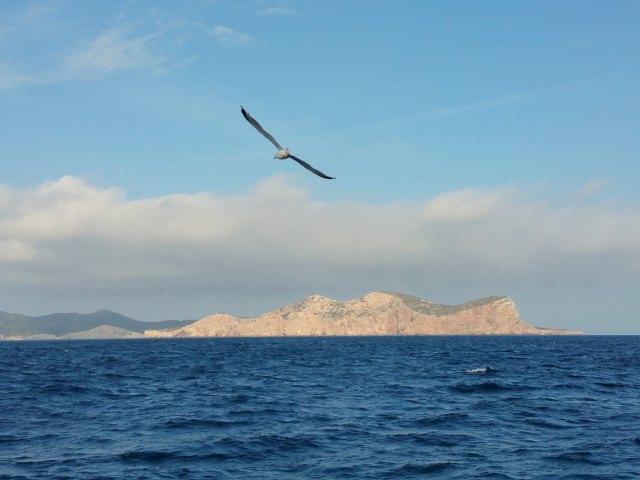Birdwatching vor der Insel Cabrera.