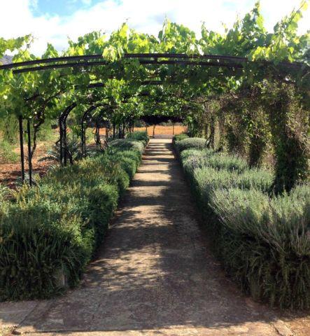 Der Kräutergarten der ehemalige Lehr-Finca Canet