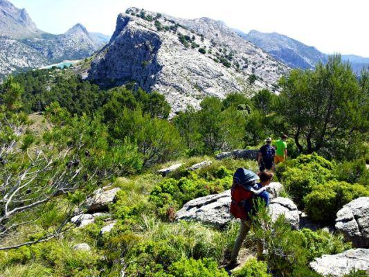 Wandern durch Olivenhaine und Wälder