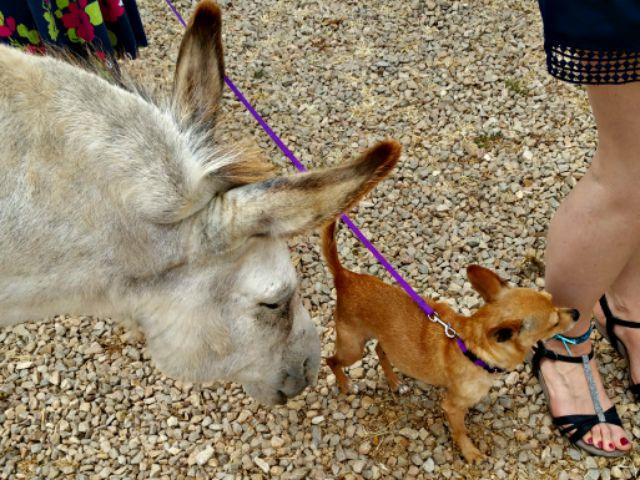 Elfie und die Esel.