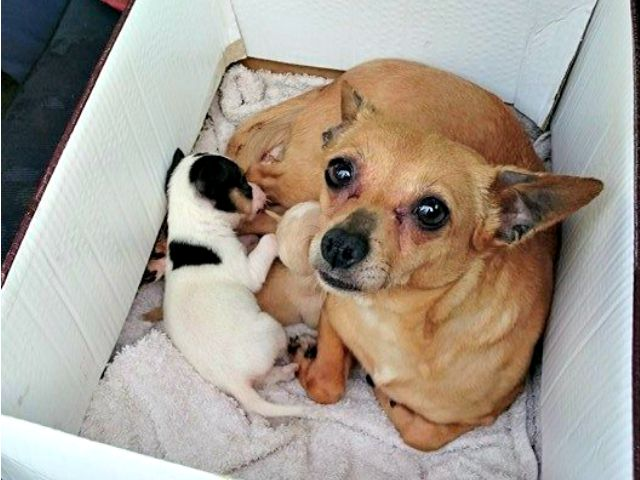 Hunde auf Mallorca - werden auch einfach mal weg geschmissen