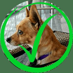 Hunde in Taschen erlaubt