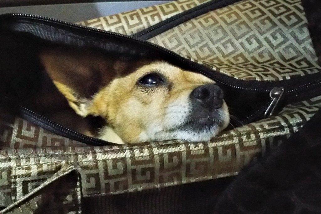 Hund im Flieger