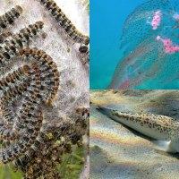 Drei gefährliche Tiere auf Mallorca