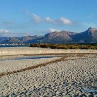 Son Serra de Marina - da wo der Hund begraben ist