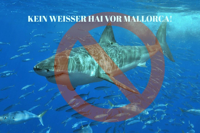 Kein Weißer Hai vor Mallorca