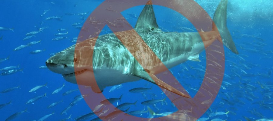 kein weisser Hai vor Mallorca