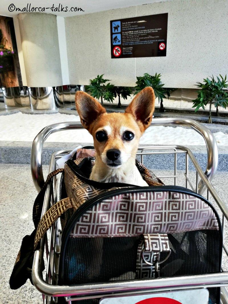 Flughafen San Juan Palma Hundezone
