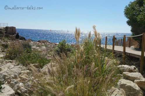 Wie kannst du Mallorca helfen - Mallorca in der Krise