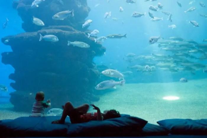 Mallorca bei Regen: Palma Aquarium