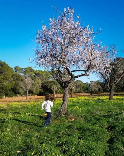 Mandelblüte im Naturpark Mondrago