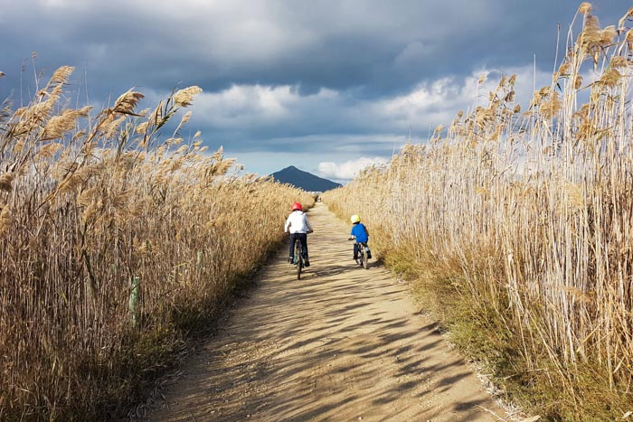 Radfahren im Naturpark Albufera
